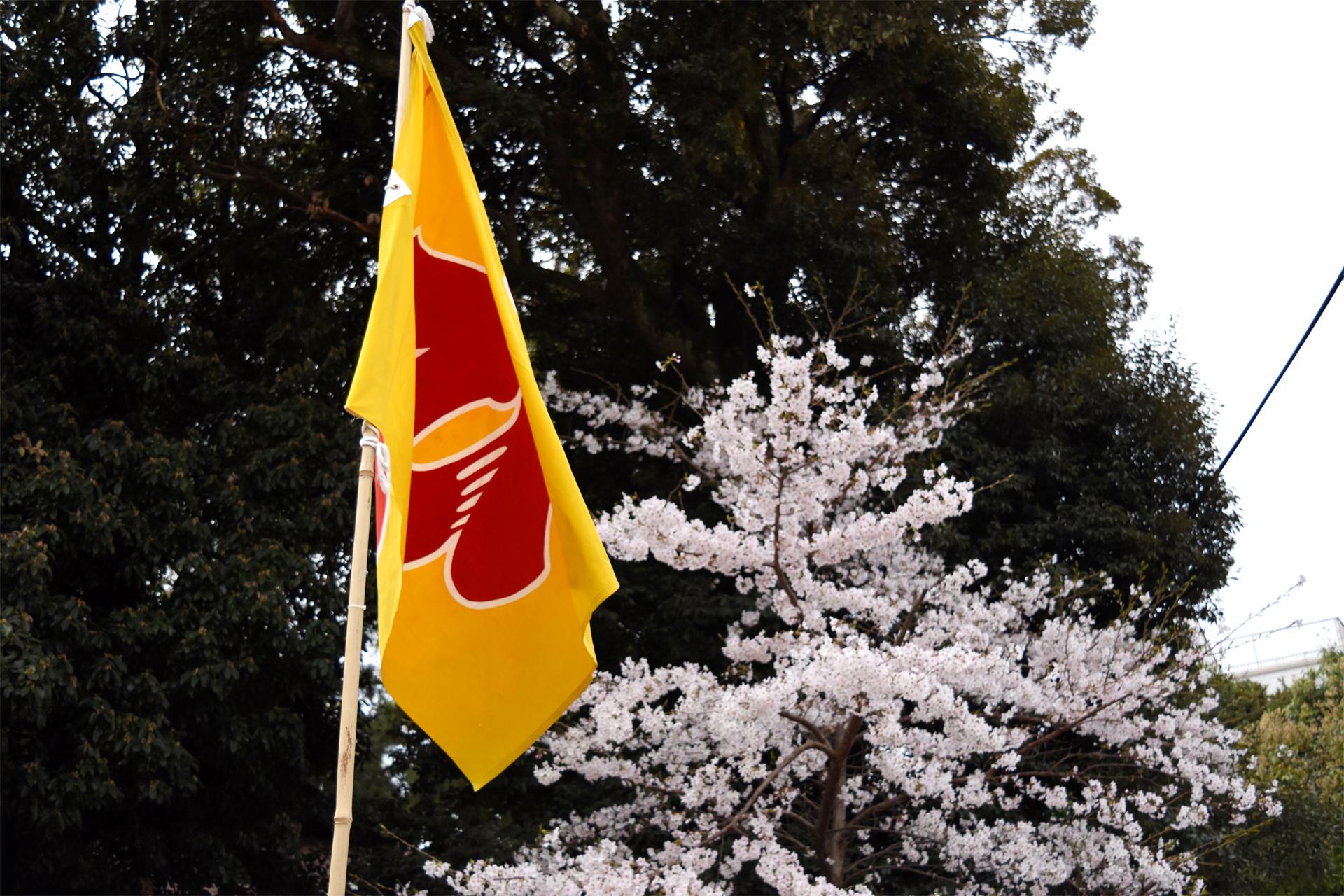 広沢町の旗と桜