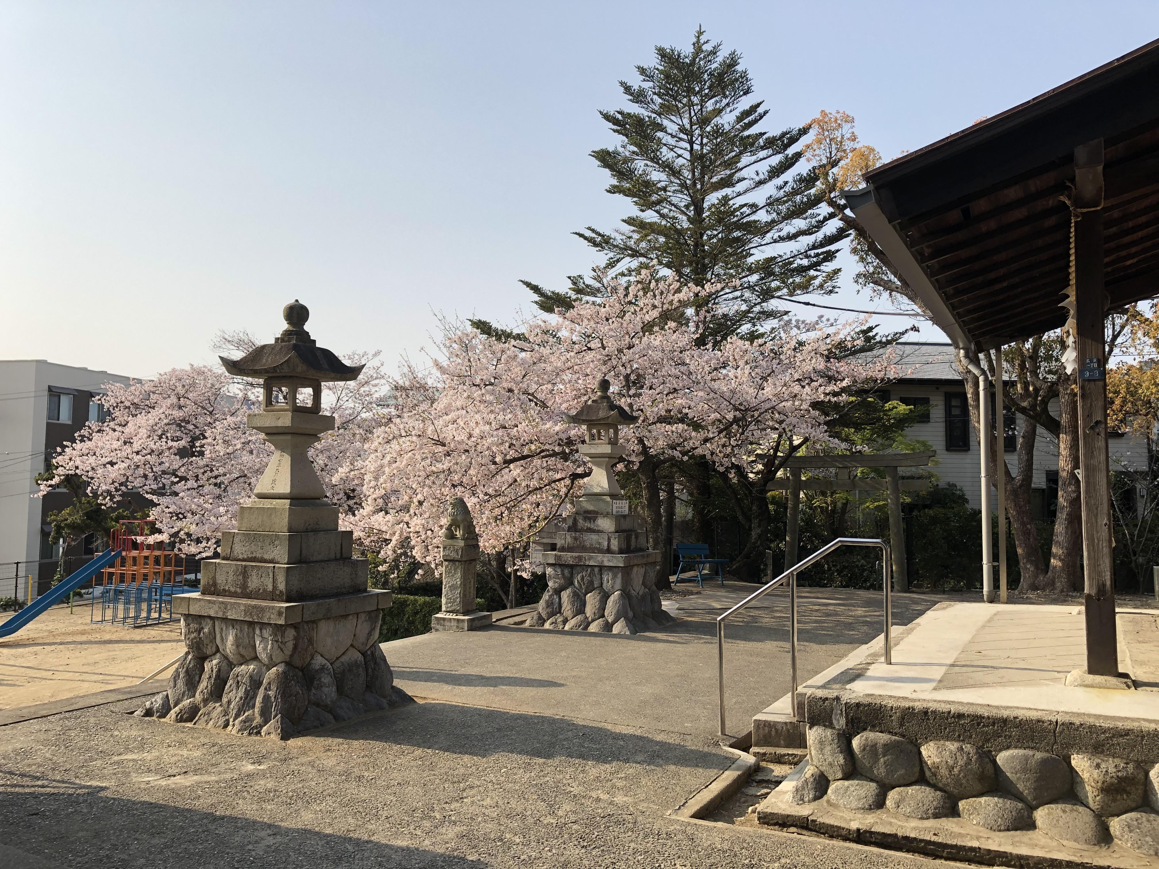 20190407浜松まつり準備 - 日枝神社の桜